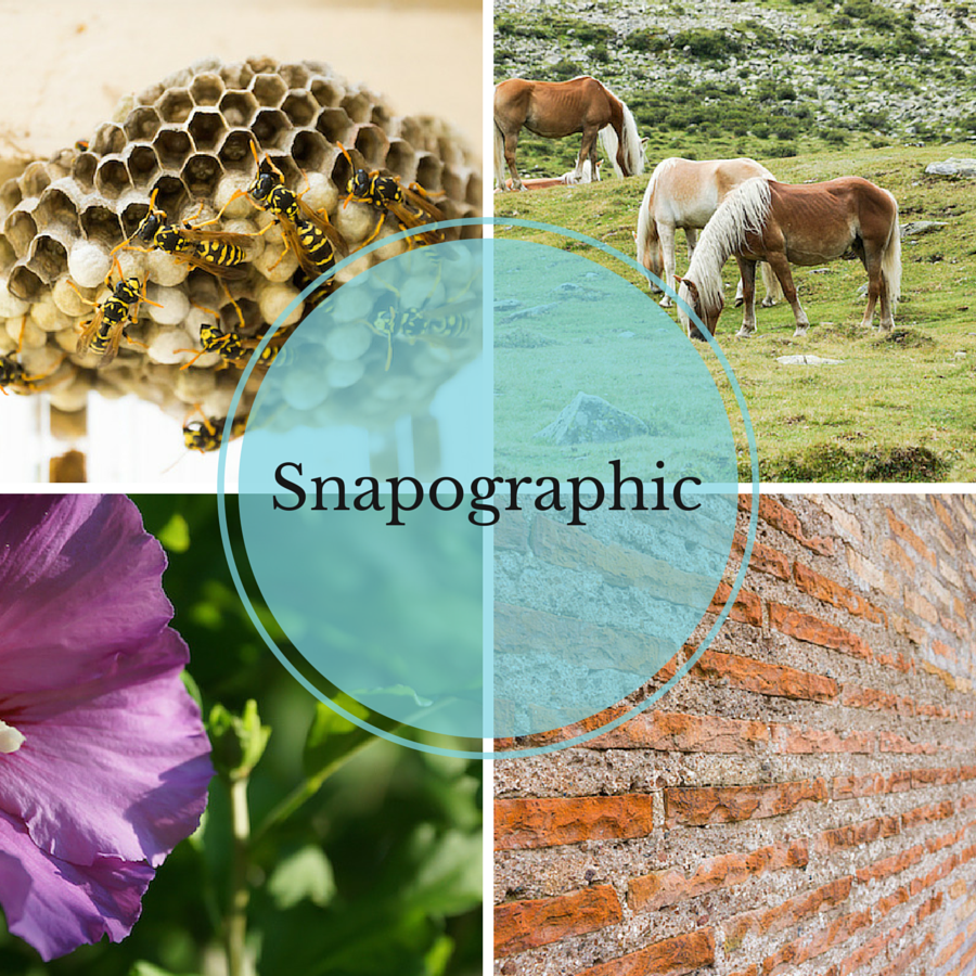 snapographic-cover