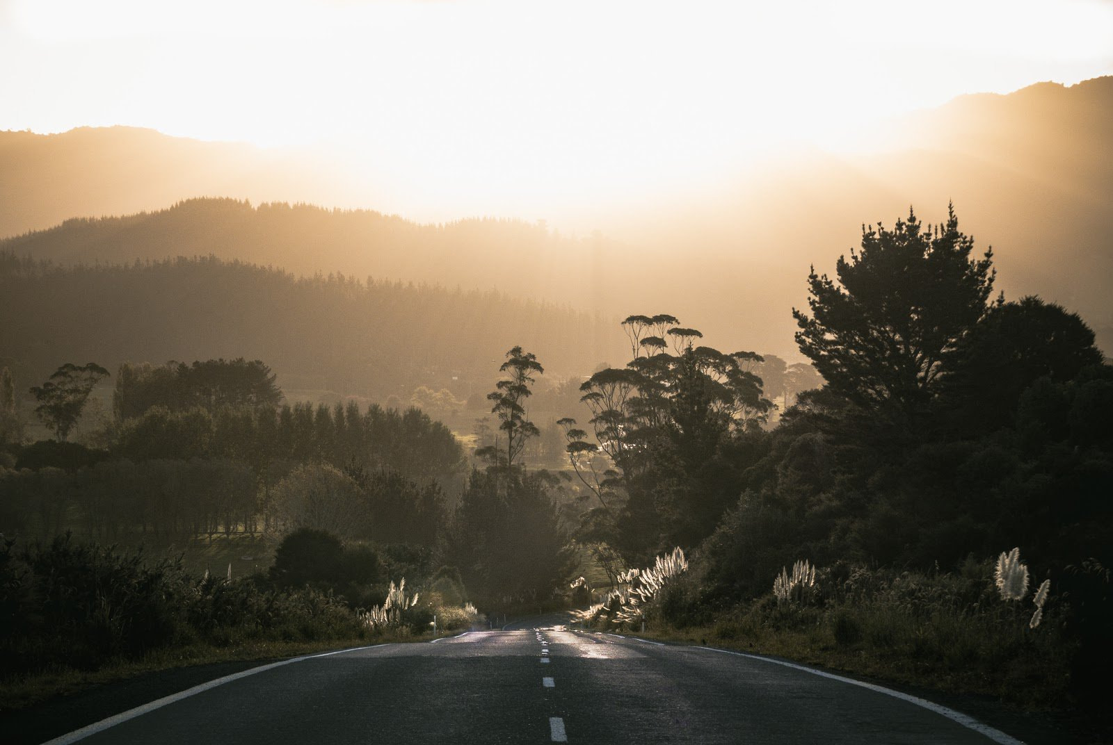 Road and forest during the golden hour by Tyler Lastovich