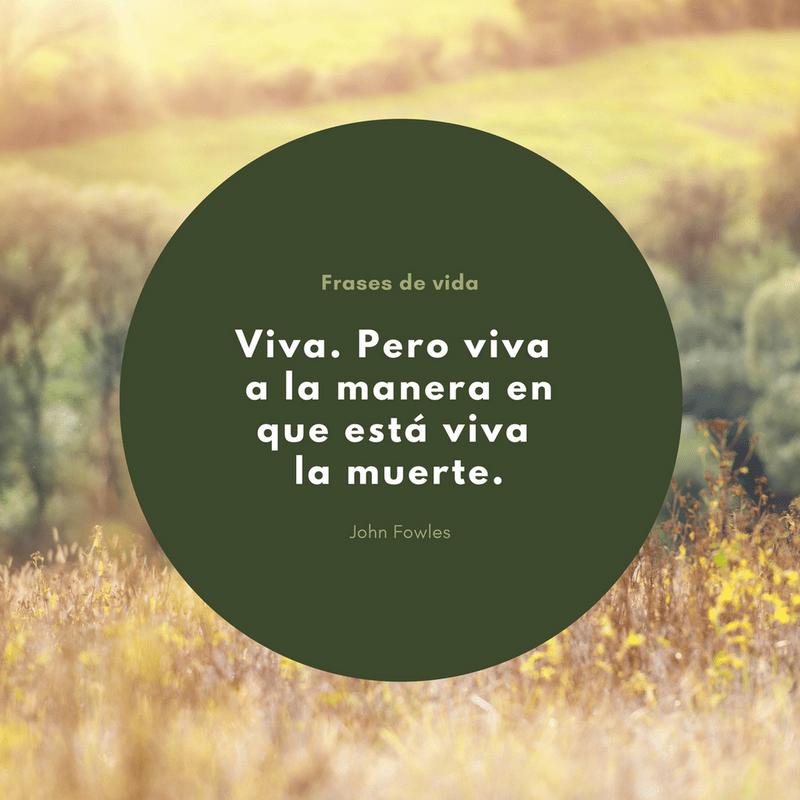 Life Quotes MX 13