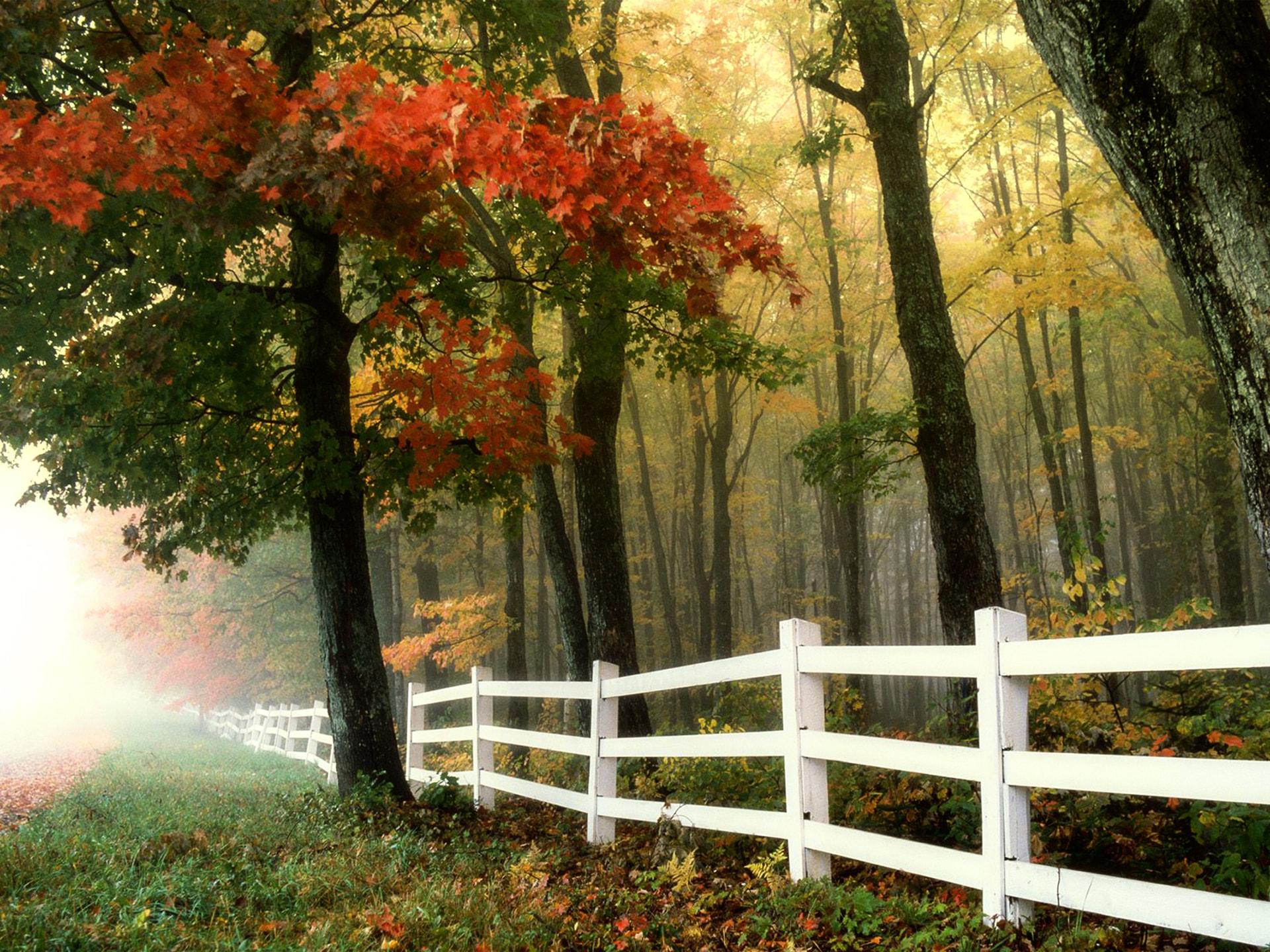 秋の壁紙事例集 フリーで使えるpc スマホ用の画像まとめ