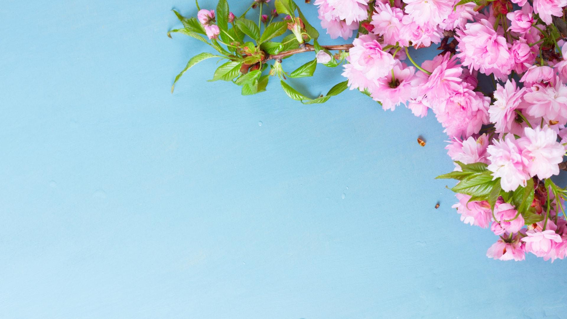 春らしいおしゃれな壁紙特集!フリーのPC・スマホ用画像総まとめ