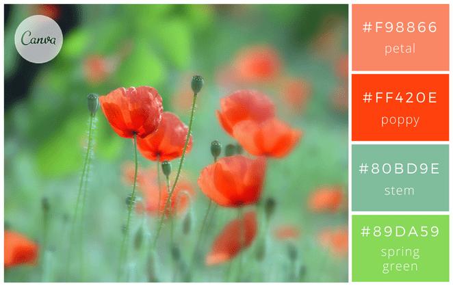 canva - nature - associer les couleurs - graphisme - design