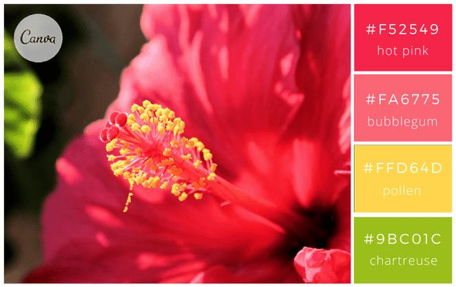 canva - associer couleurs - graphisme - design - nature