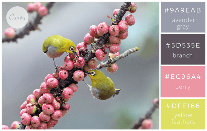 canva - design - graphisme - associer les couleurs