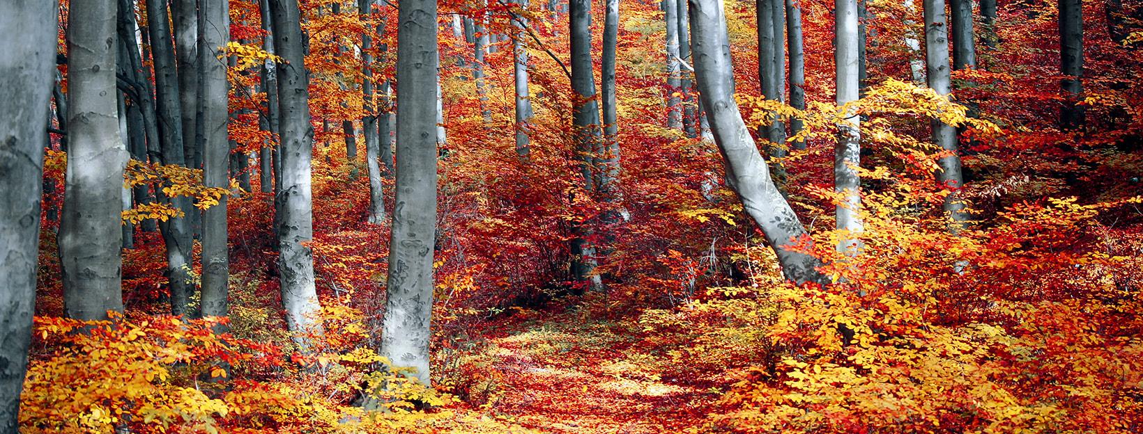 Herbst-Hintergrundbilder: Bunte Blätter im Herbstwald