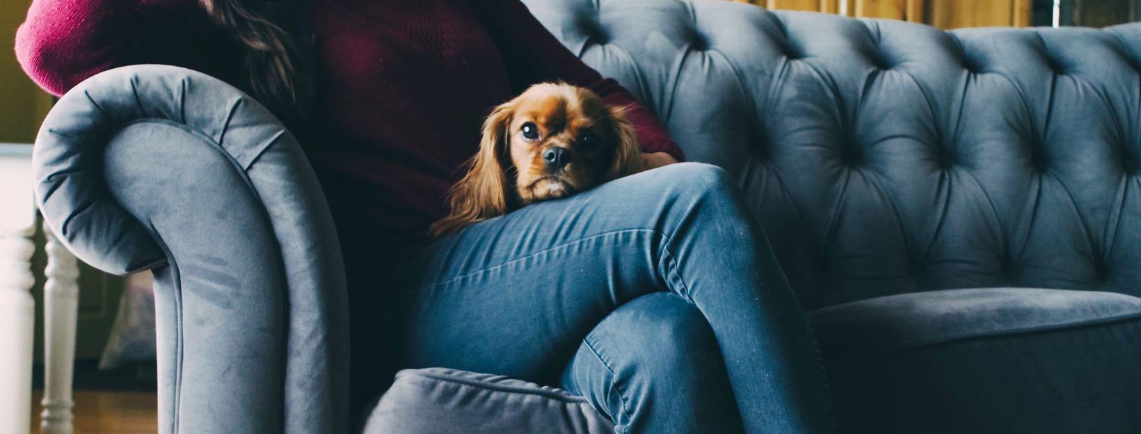 Hund auf dem Schoß vom Frauchen auf der Couch