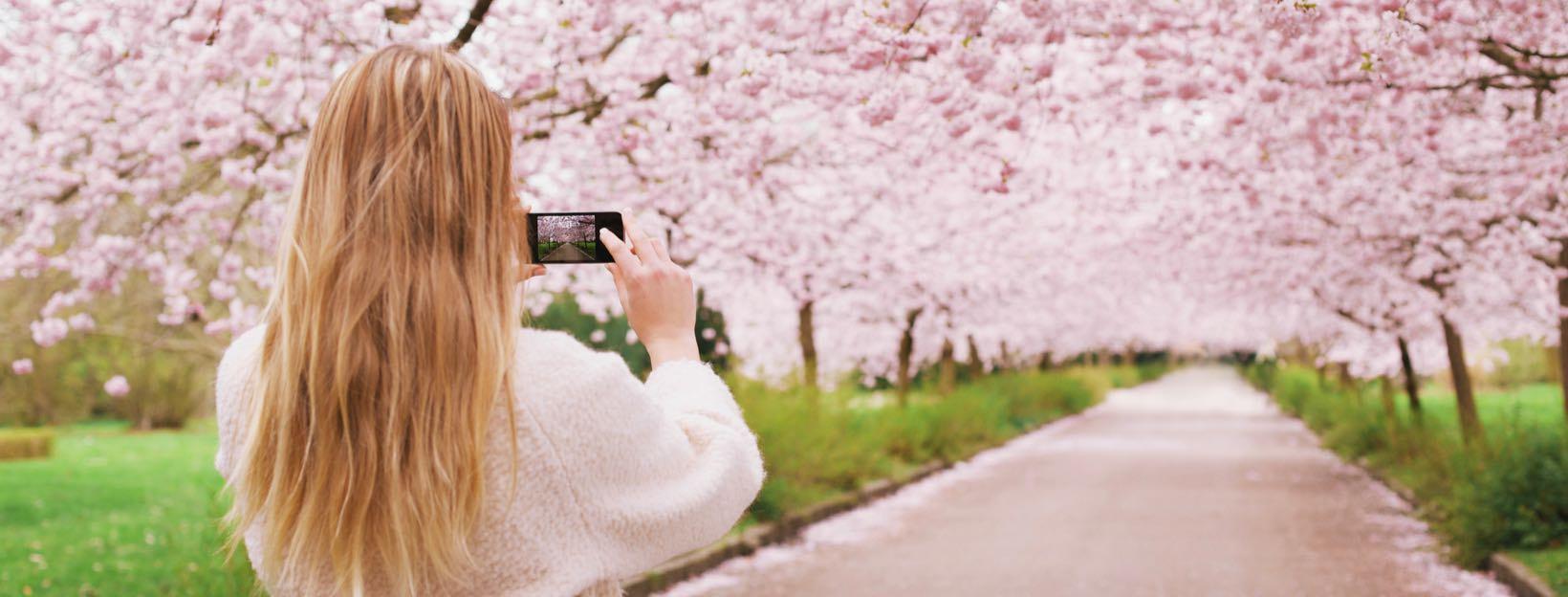 Frau macht Foto von Kirschblütenweg: Instagram für Einsteiger, Instagram Guide, Instagram Account erstellen, Instagram beginnen, Instagram Ratgeber