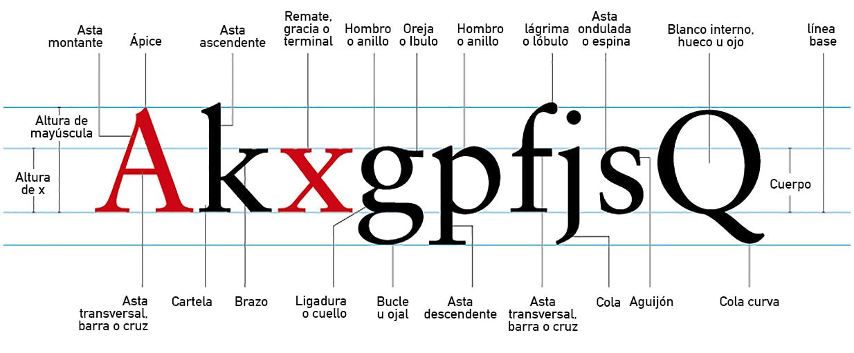 Anatomía de las letras