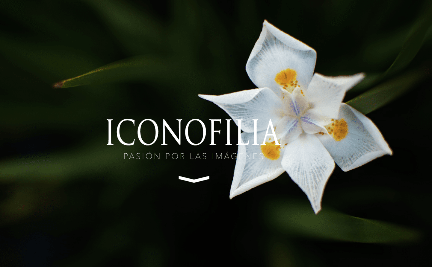 Iconofilia
