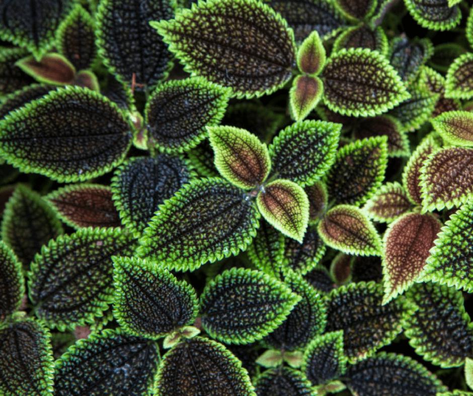 Textura de la naturaleza