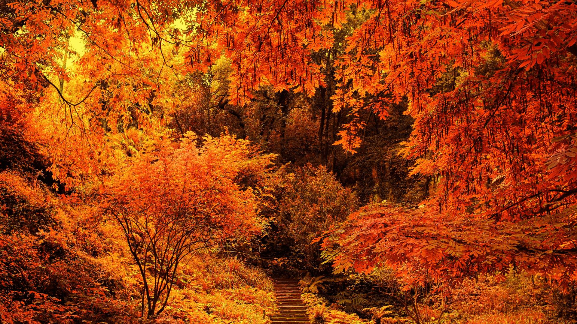 Обои осень, красиво. Природа