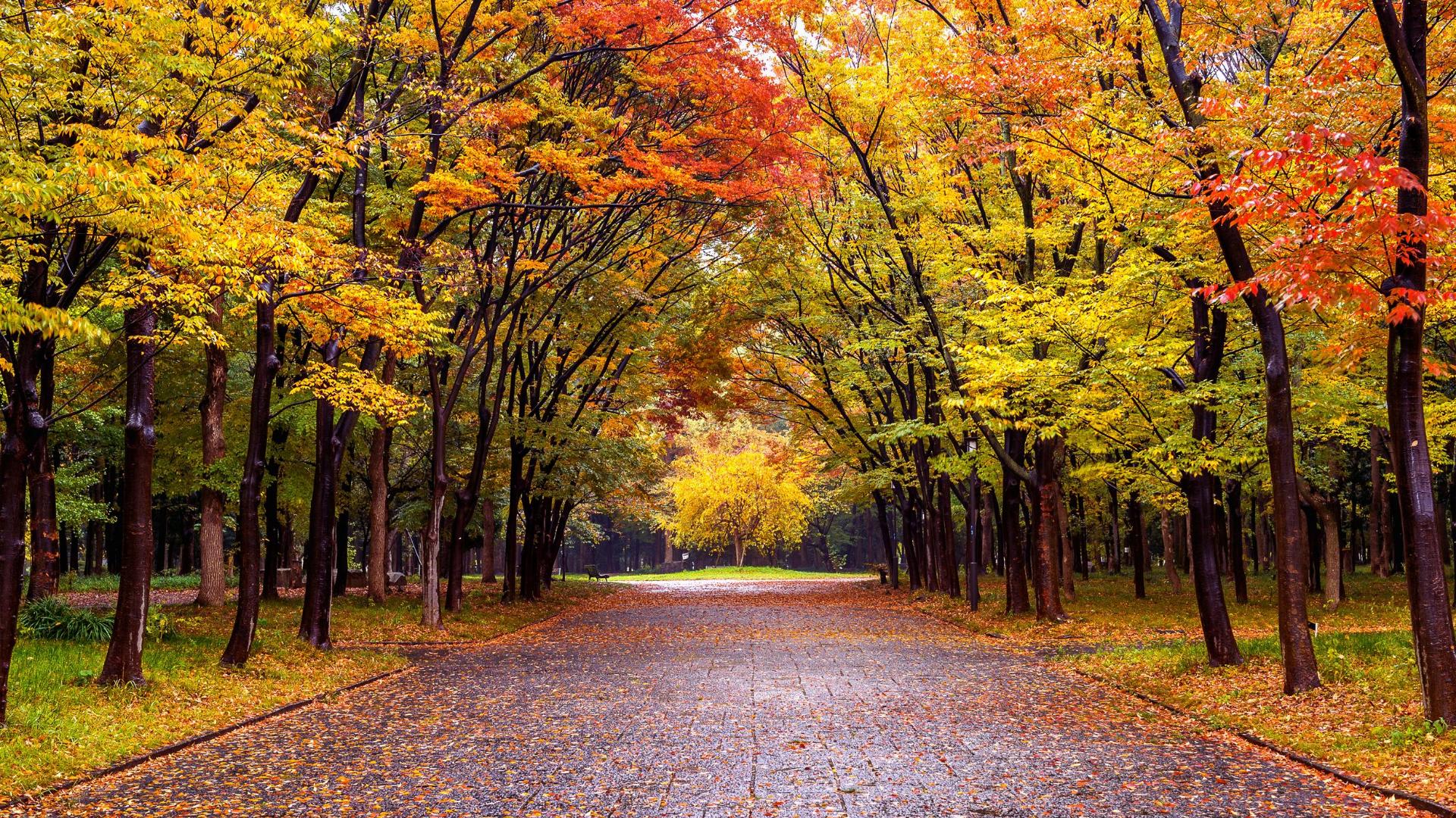 Обои красиво, осень. Природа foto 2