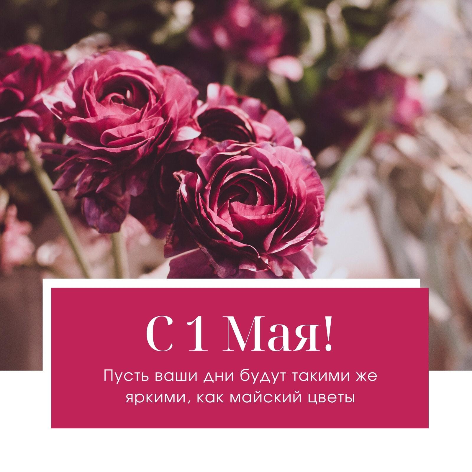 Малиновая Фотография Цветы 1 Мая Instagram Публикация