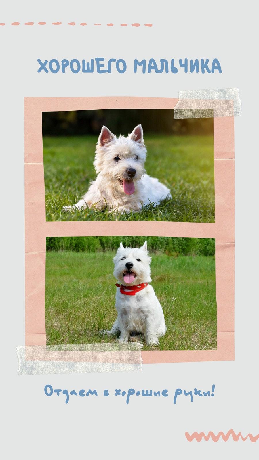Серая Ваша история с фотографиями собак в рамке