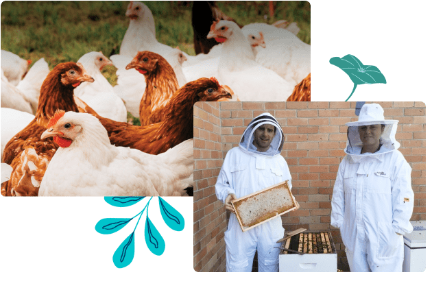 Chickens at the farm and beehives on the Canva rooftop