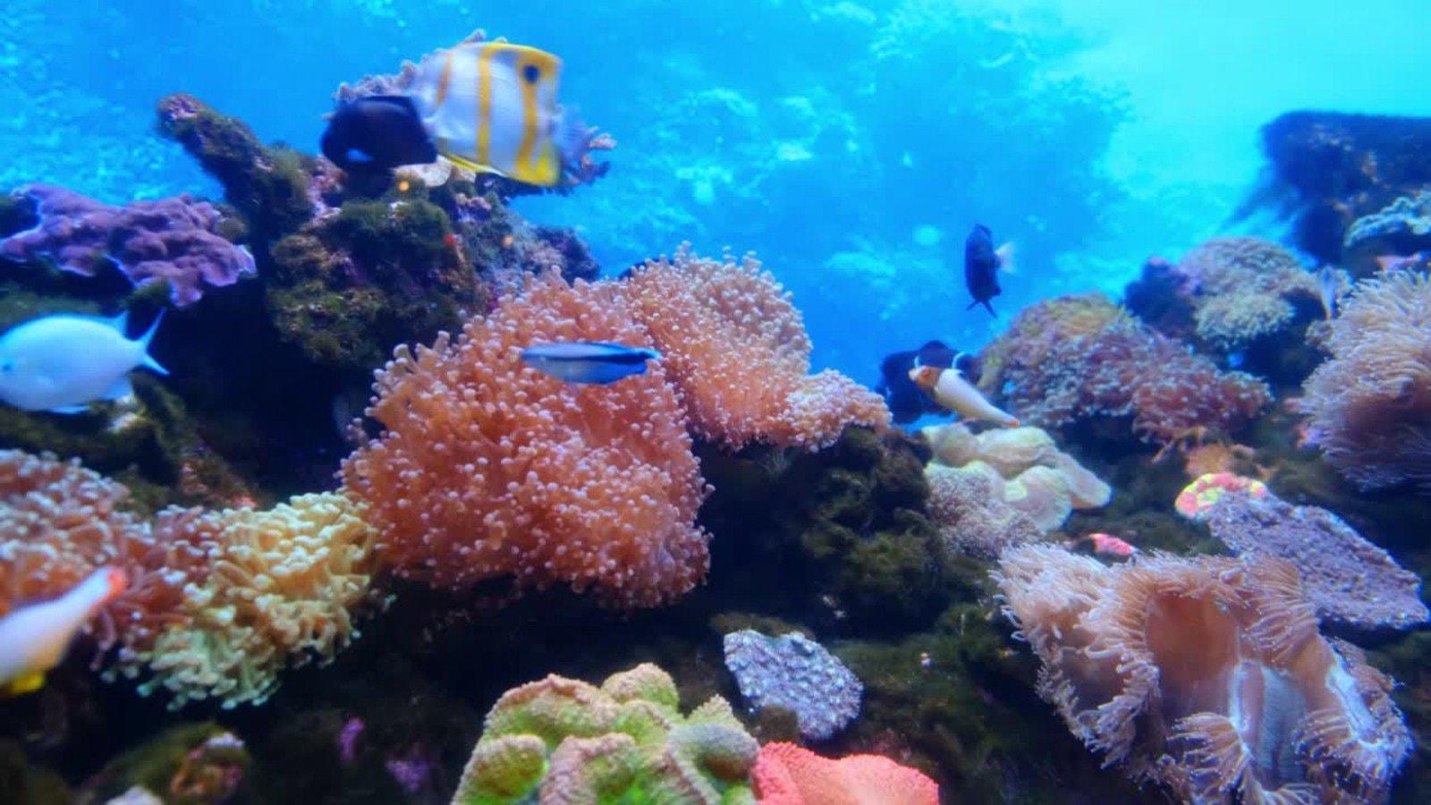 Underwater Video Zoom Virtual Background