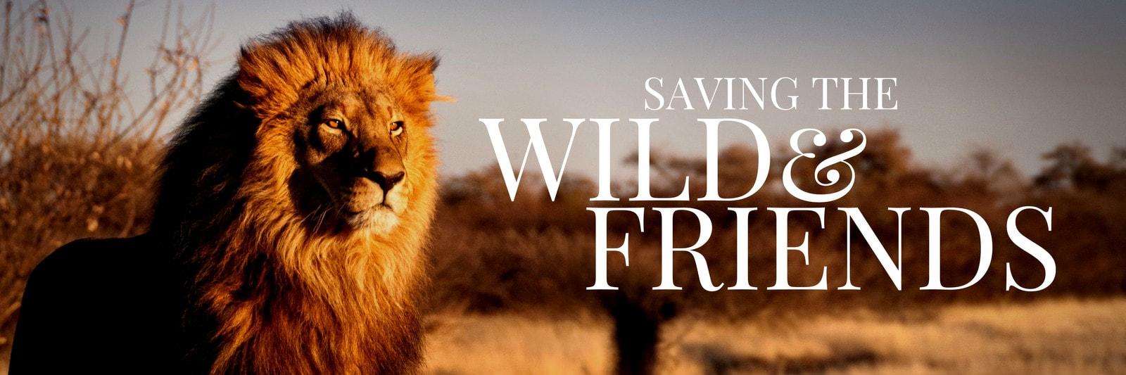 Wild Lion Photo Twitter Header