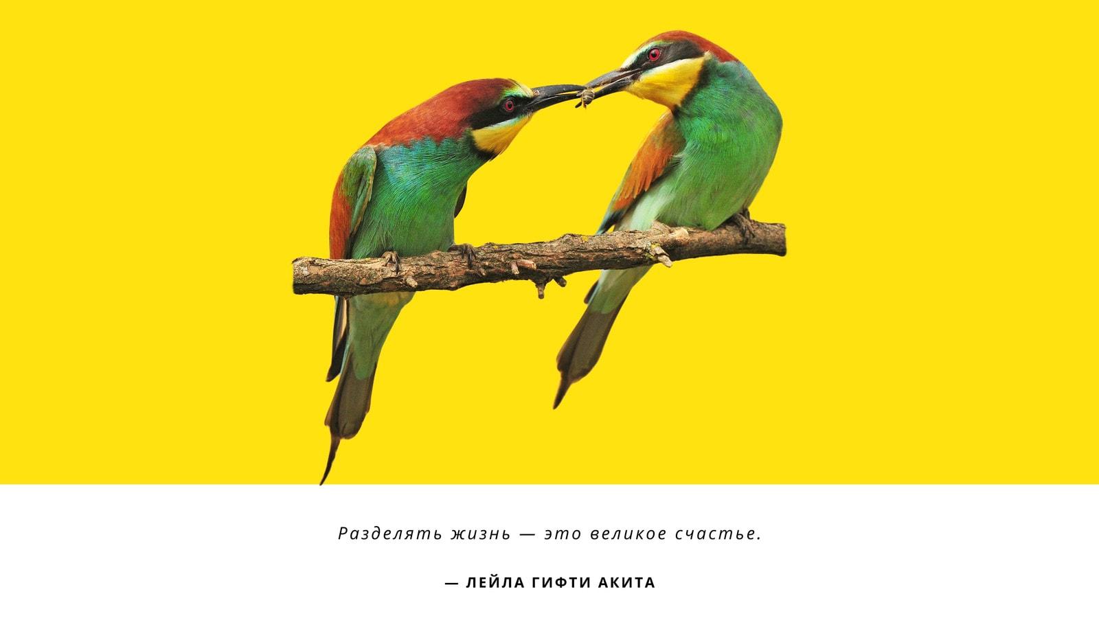 Желтые Обои на  Рабочий Стол с Пальмой Птицами и Природой