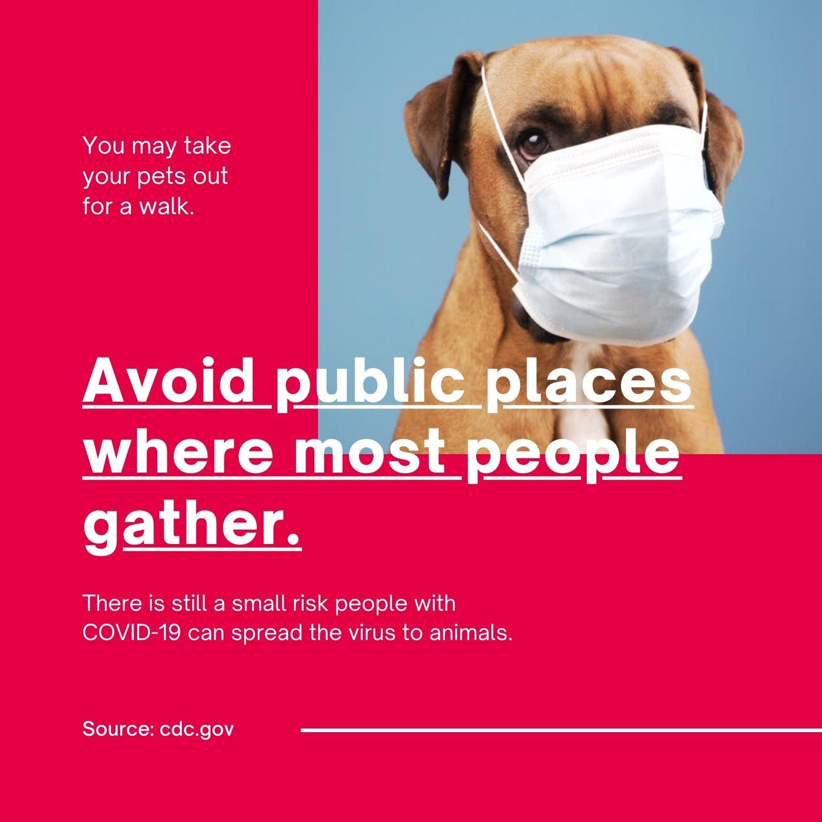 Red Geometric Info Pet Care Coronavirus Social Media Post