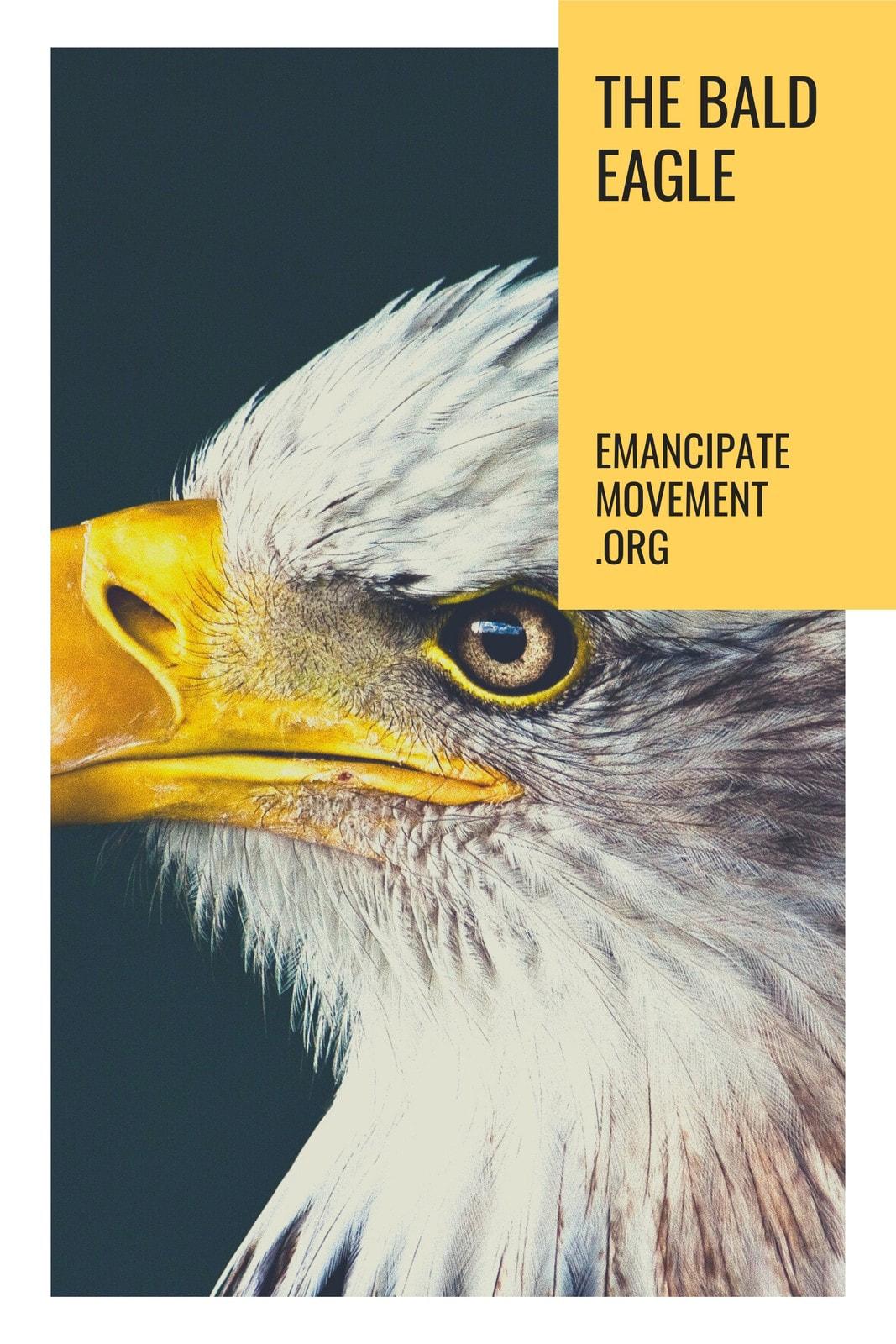 Eagle Movement Organization Tumblr Graphics