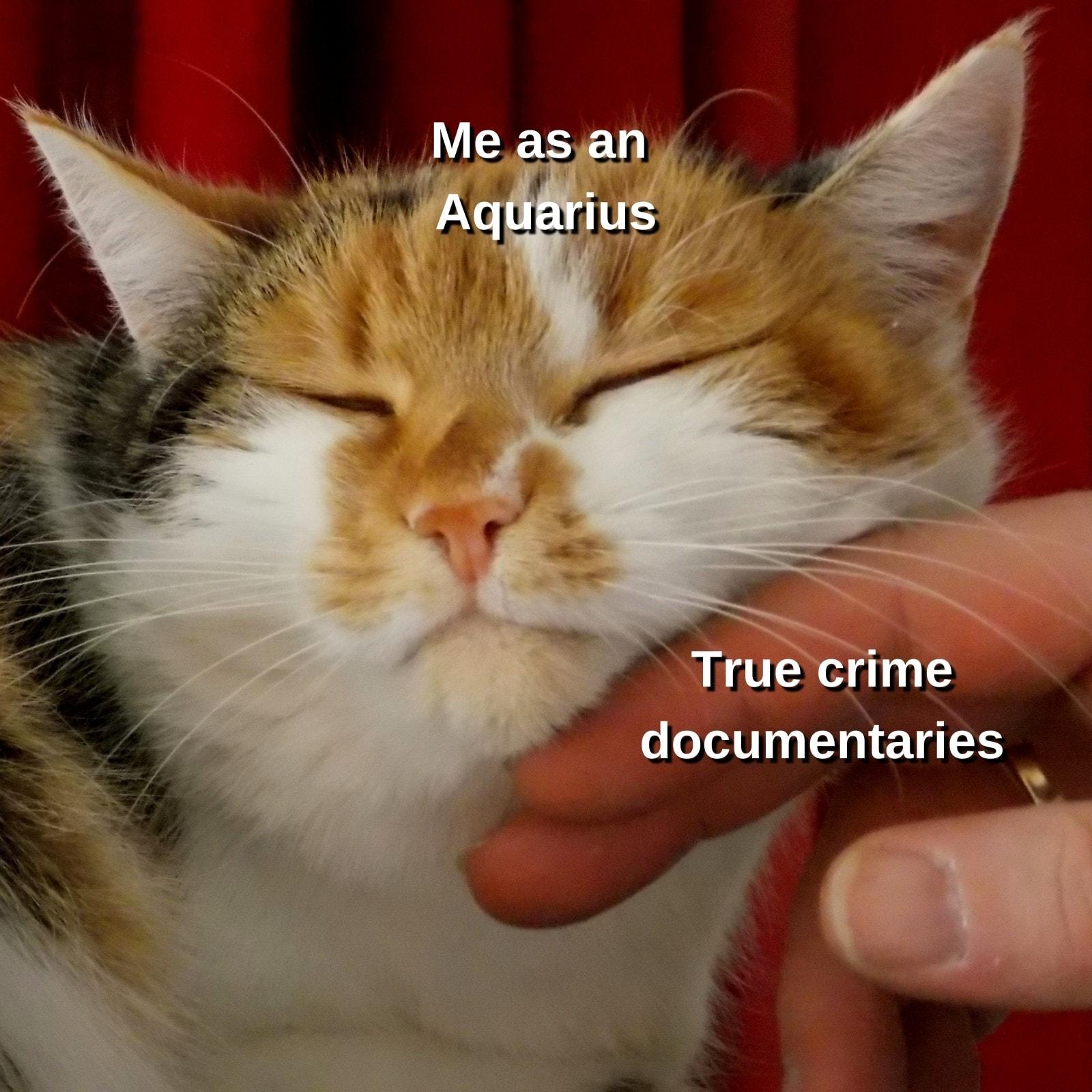 Cat Zodiac Sign Square Animal Meme