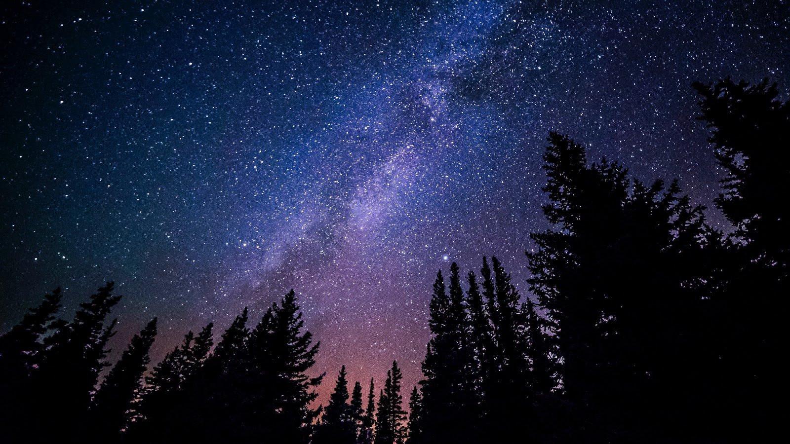 Night forest stars