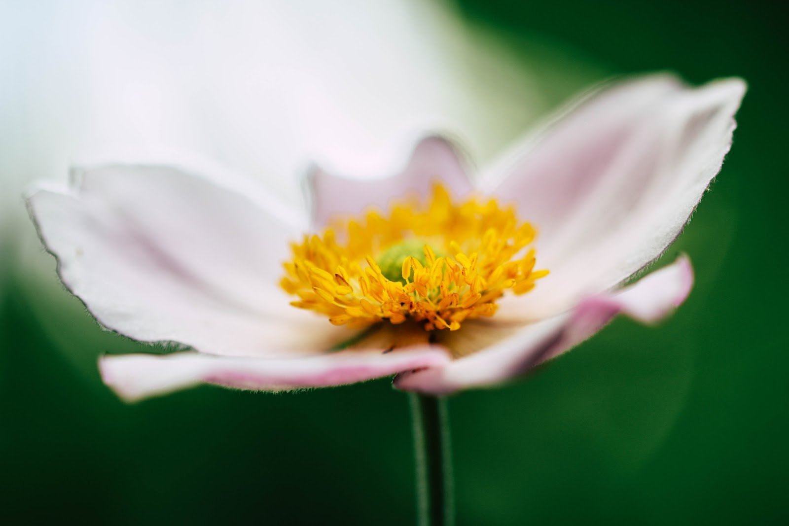 macro-photography-annelie-turner