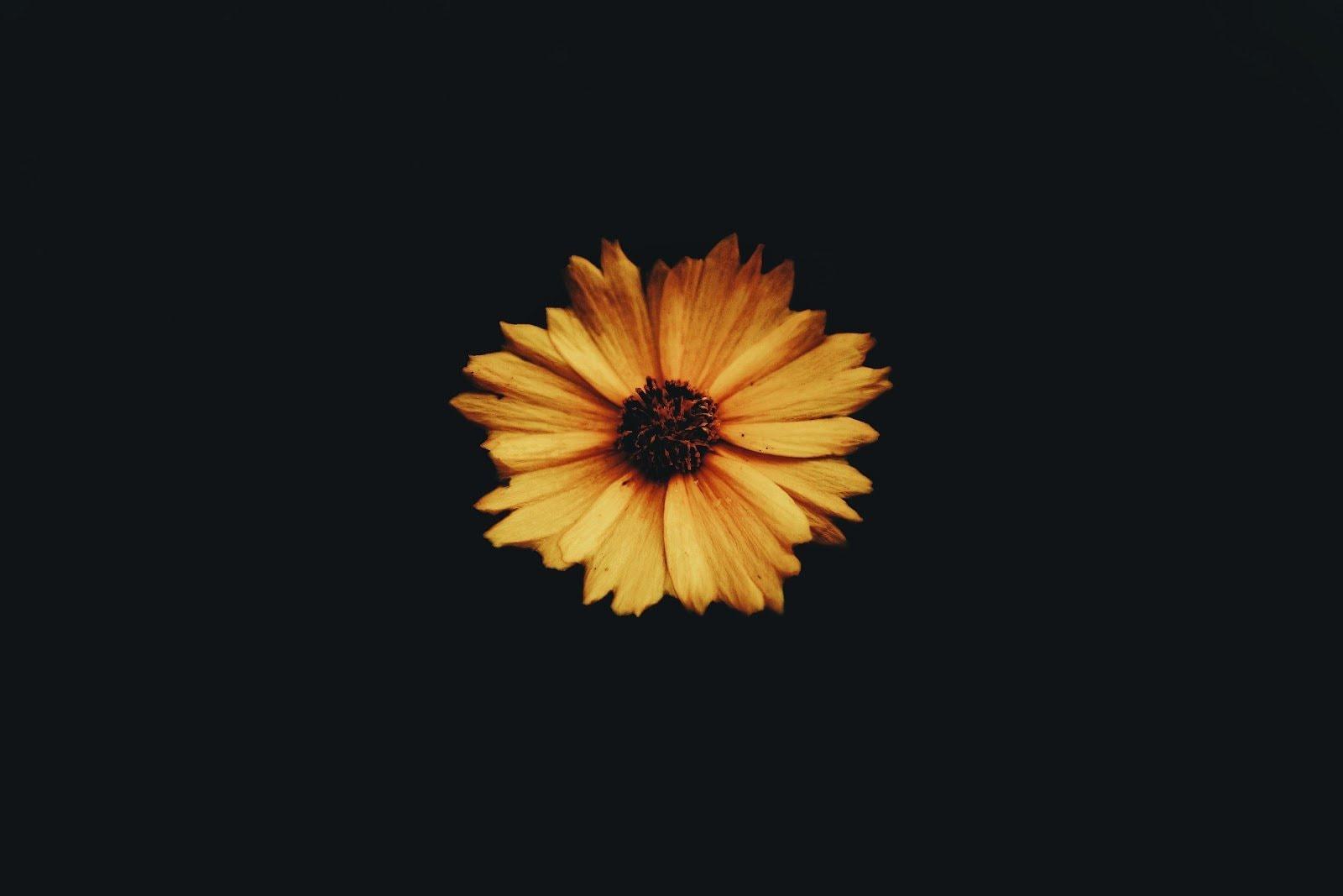macro-photography-shahzin-shajid