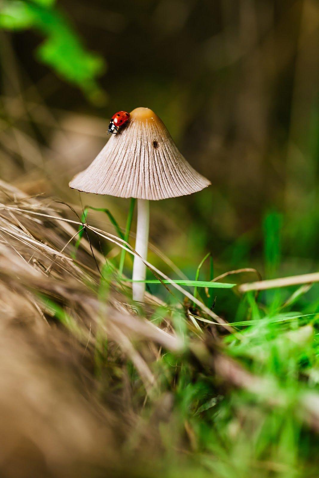 macro-photography-benjamin-balazs