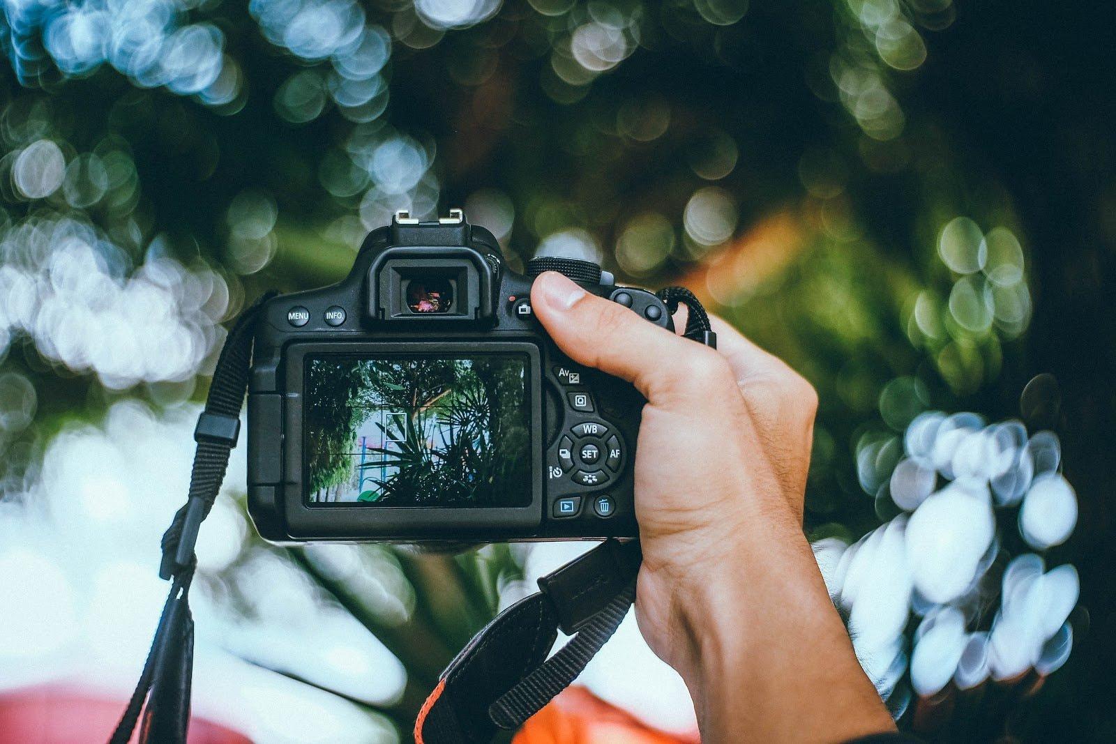 Trees seen through a camera display photo by Kawin Harasai