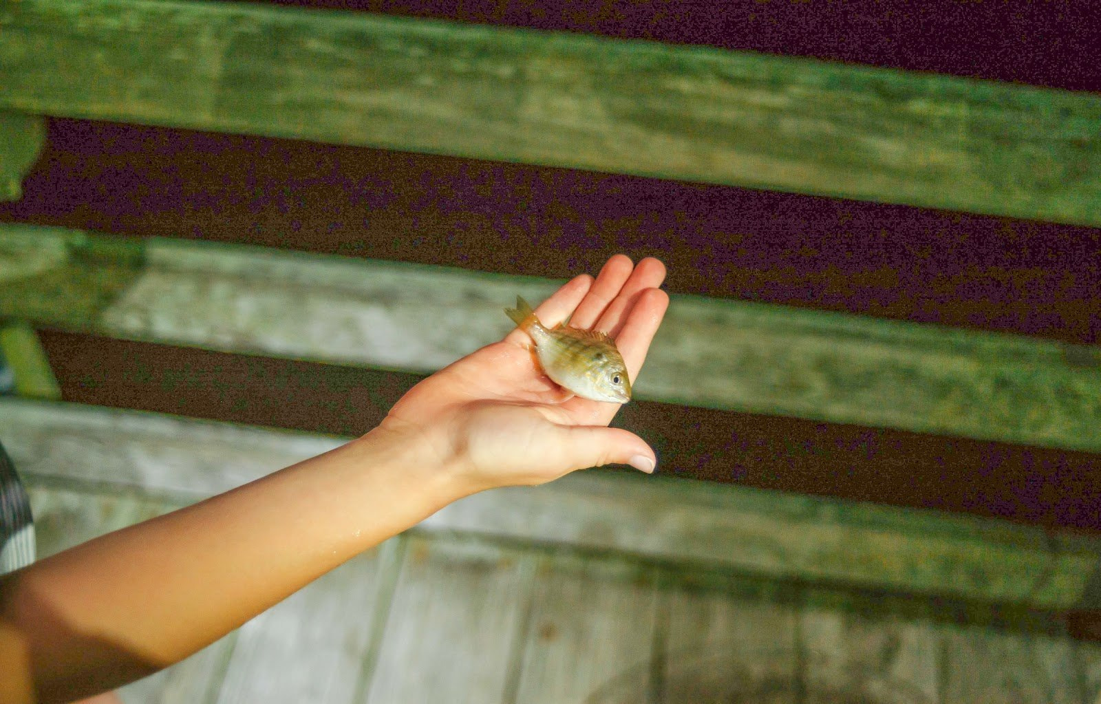 A hand holding a small fish as an example of a JPEG image with visible artifacts by Chad Verzosa