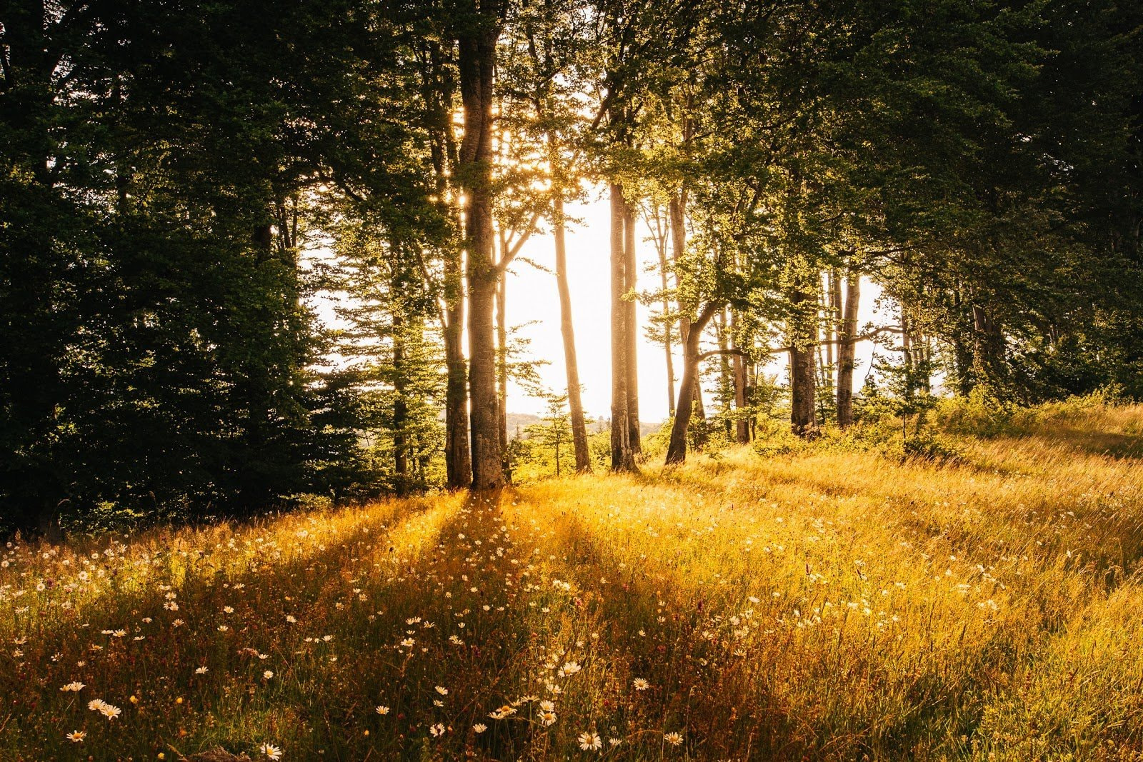 Forest during the golden hour by Anton Darius