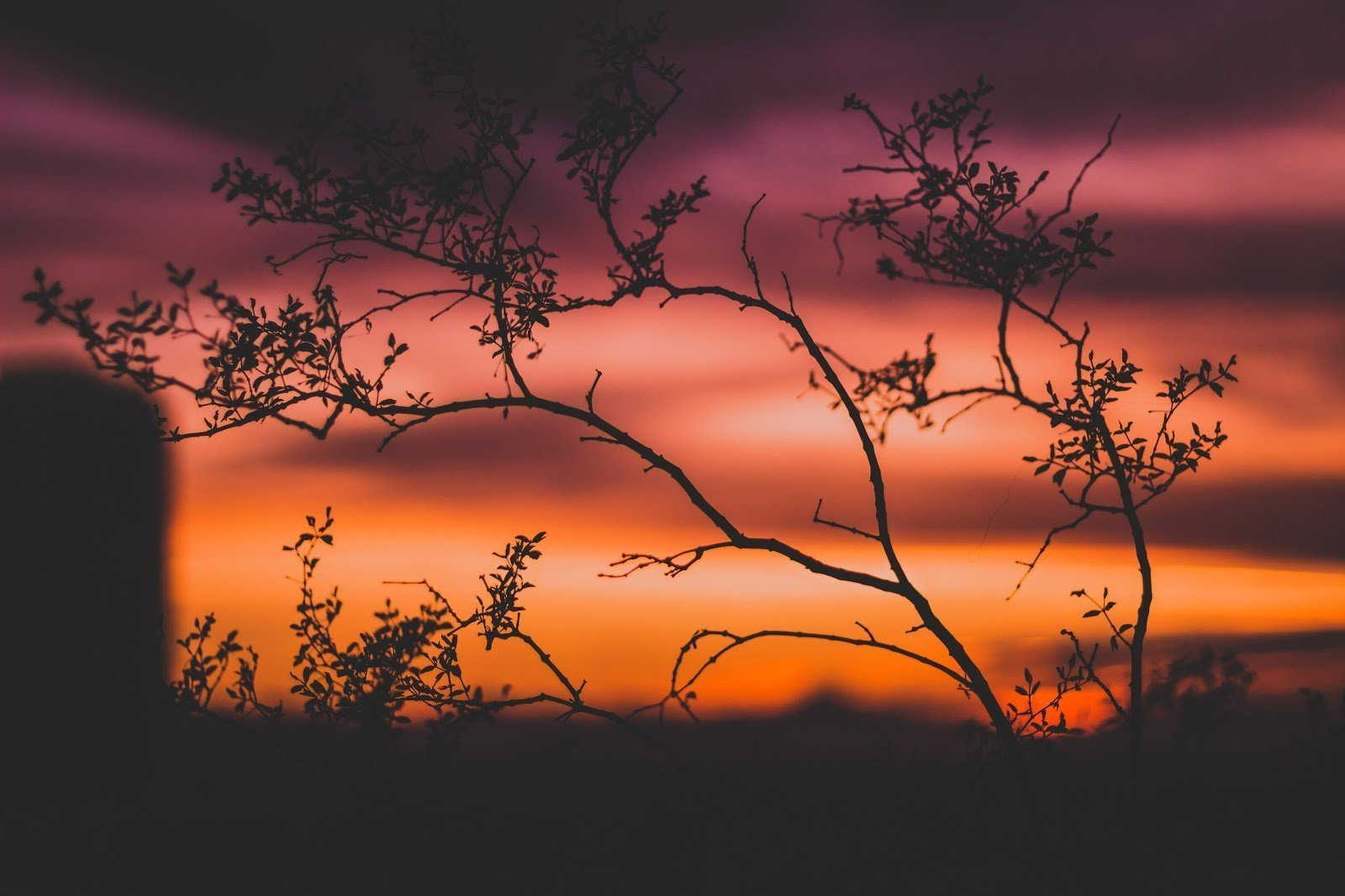 Silhouette of a tree during sunset by Alex J. Reyes