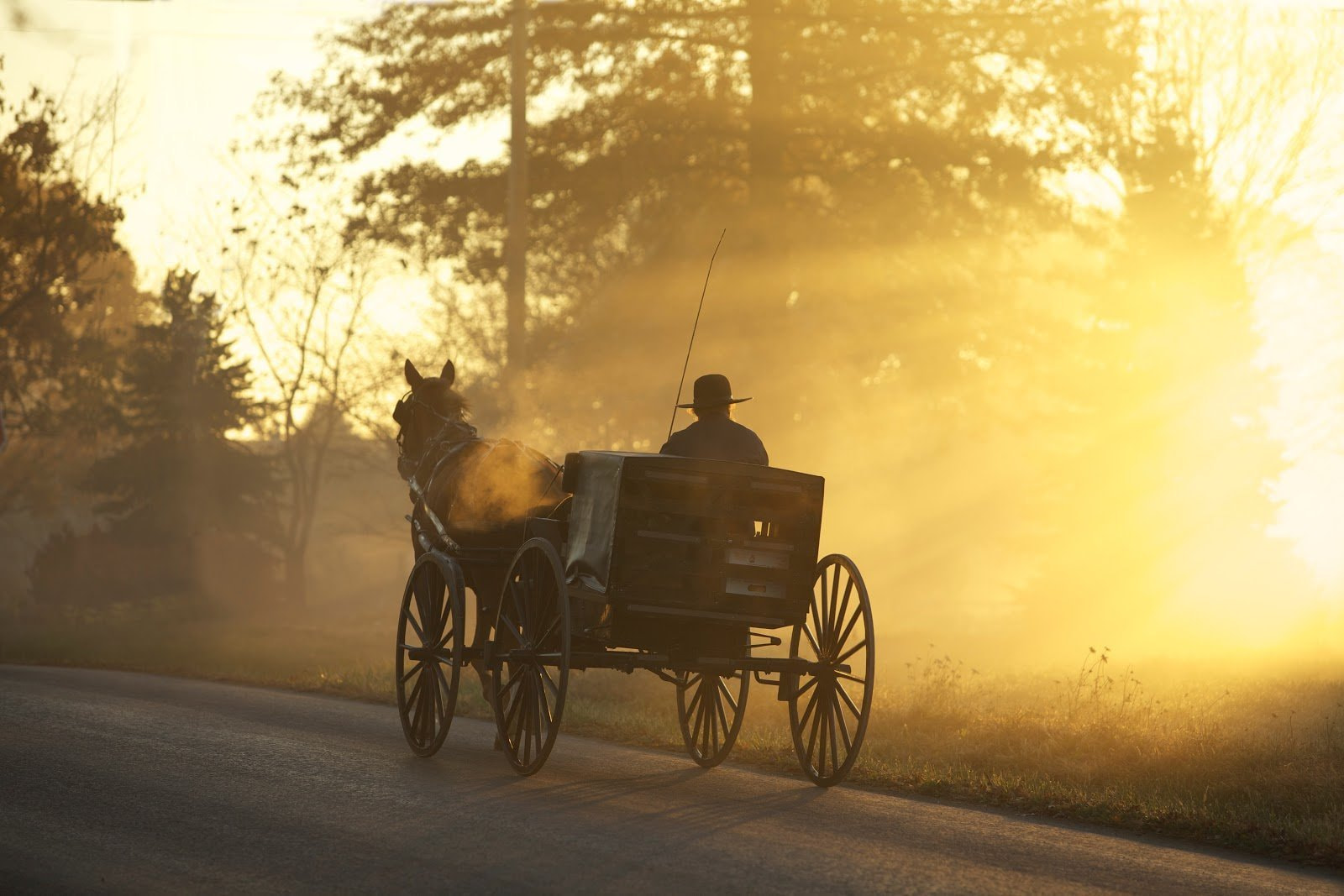 Golden hour photography of a man riding in his cart by Randy Fath