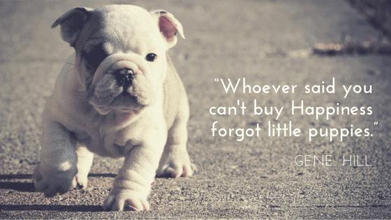 Example of how to create a graphic using a humorous quote