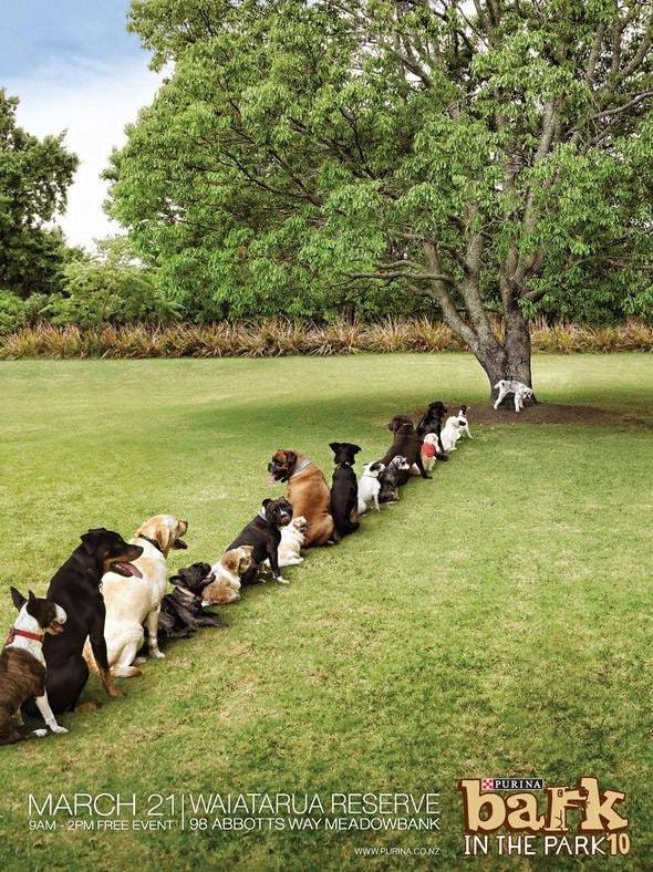 43. Bark in the Park