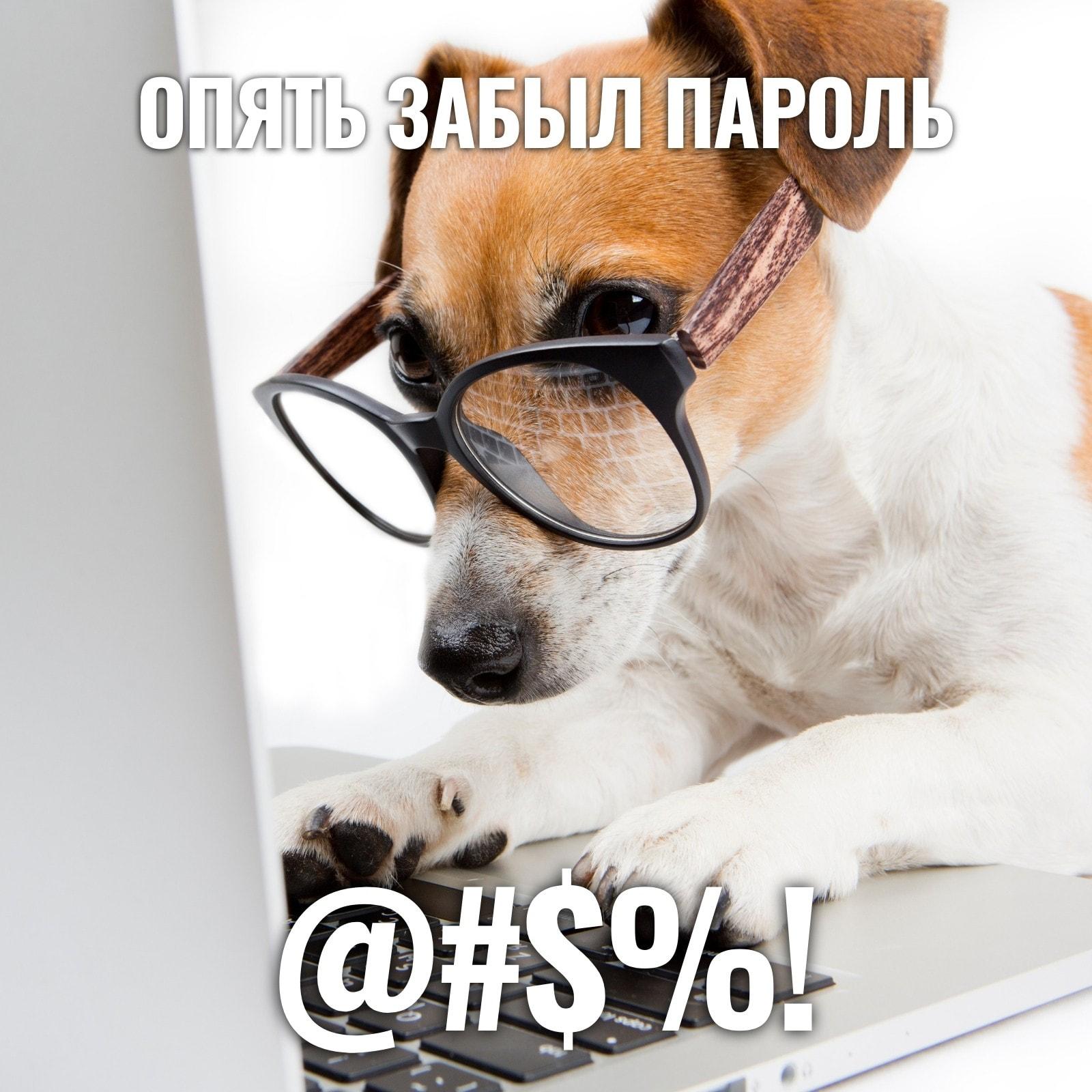 Собака Пароль Квадрат Животное Мем