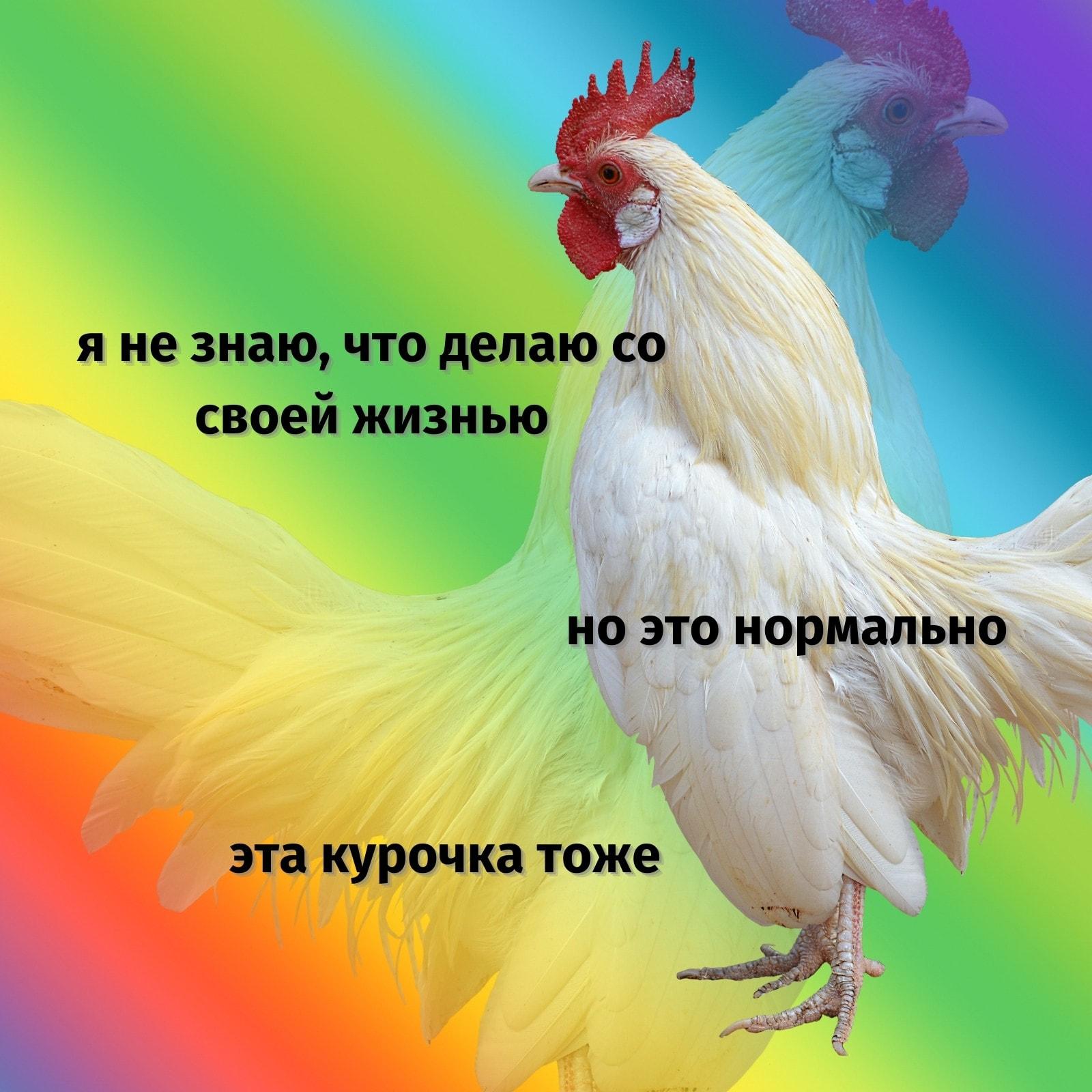 Разноцветный Петух Необычный Градиент Экзистенциальный Квадрат Вдохновляющий Мем