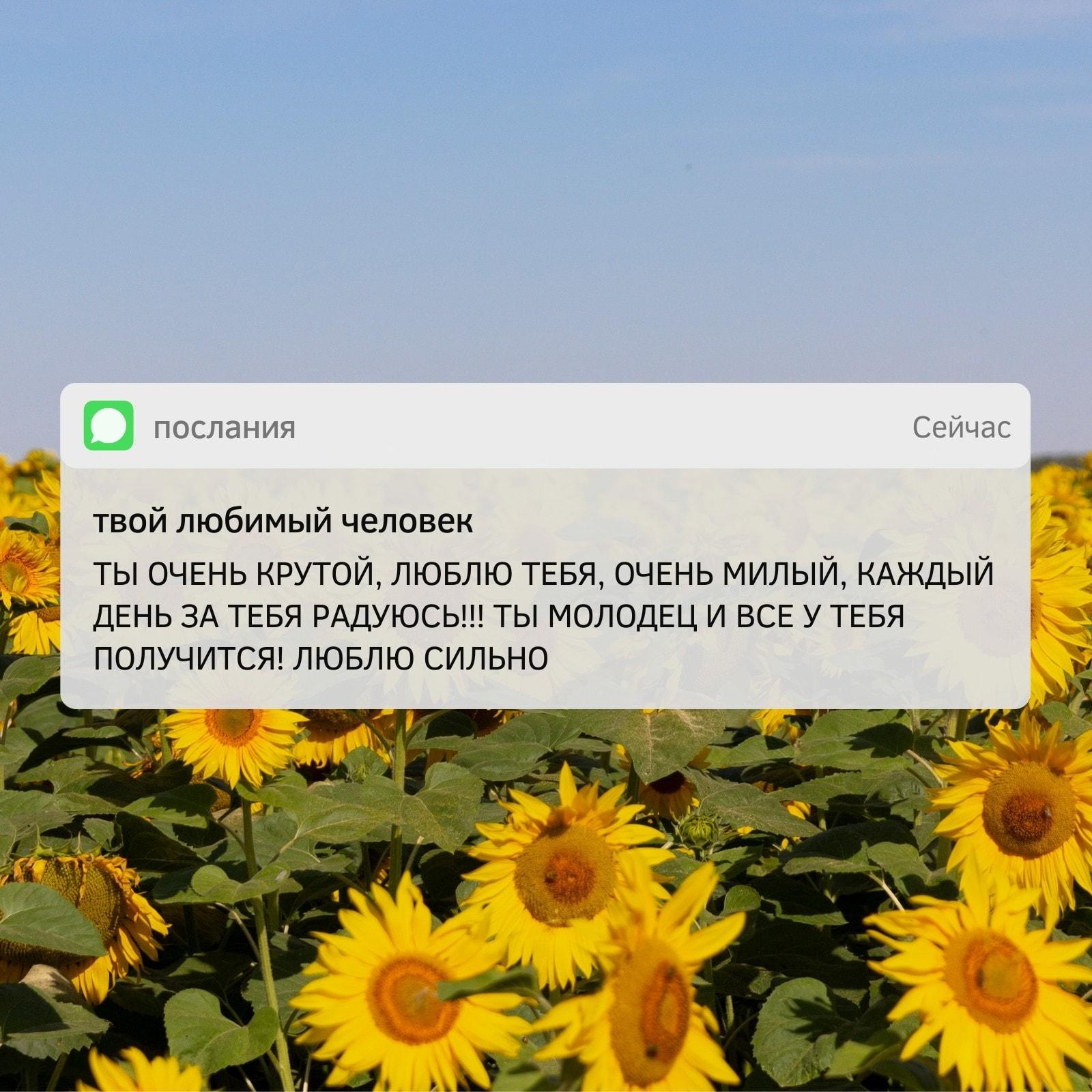 Подсолнухи Телефон Интерфейс / Уведомление Квадрат Вдохновляющий Мем