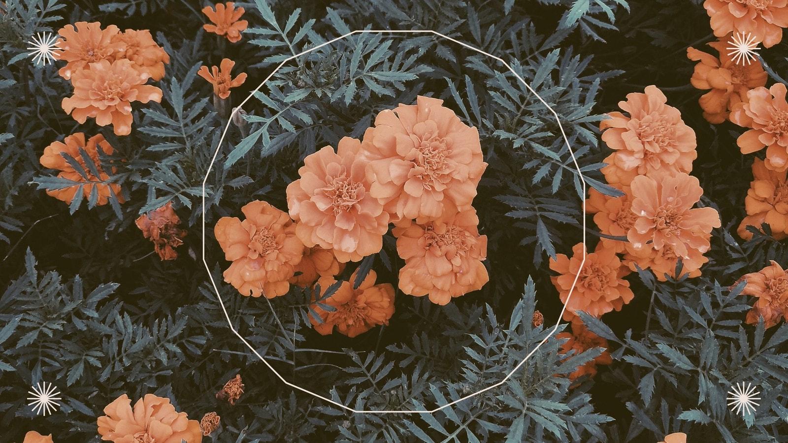 Arancione e verde sfondo zoom anniversario floreale foto fiori