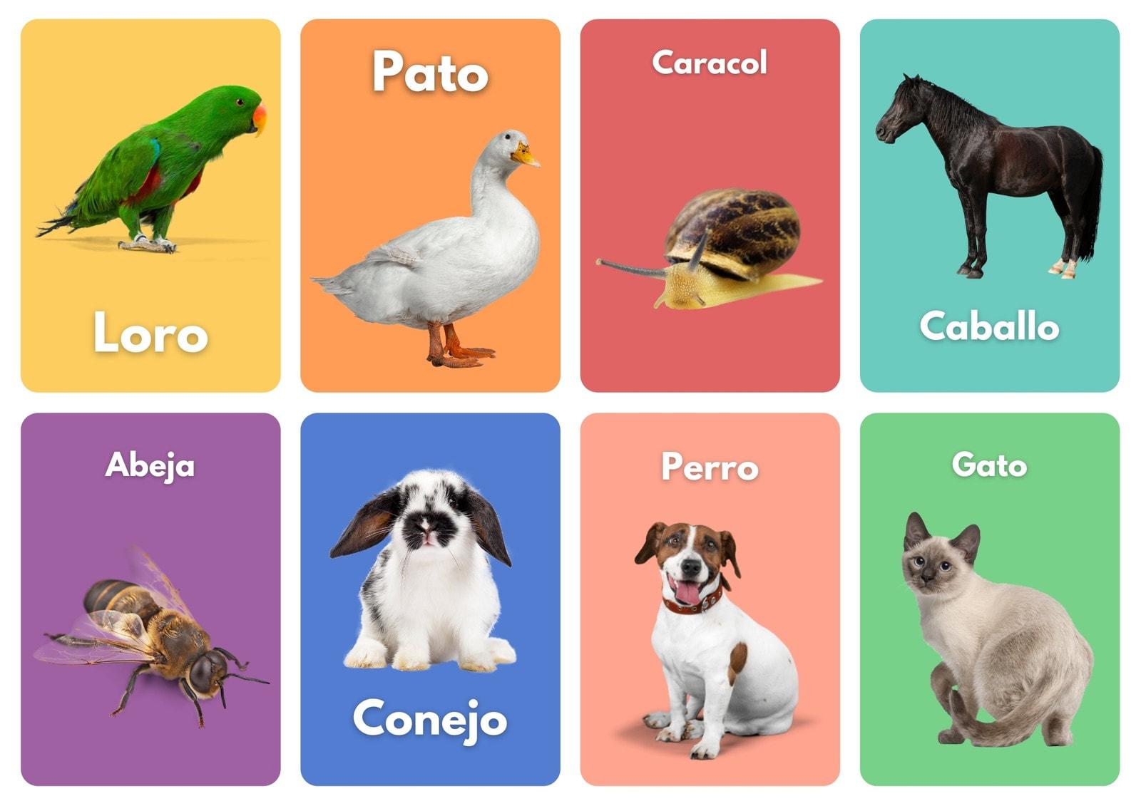 Aprende los Animales Fotos Tarjetas Láminas
