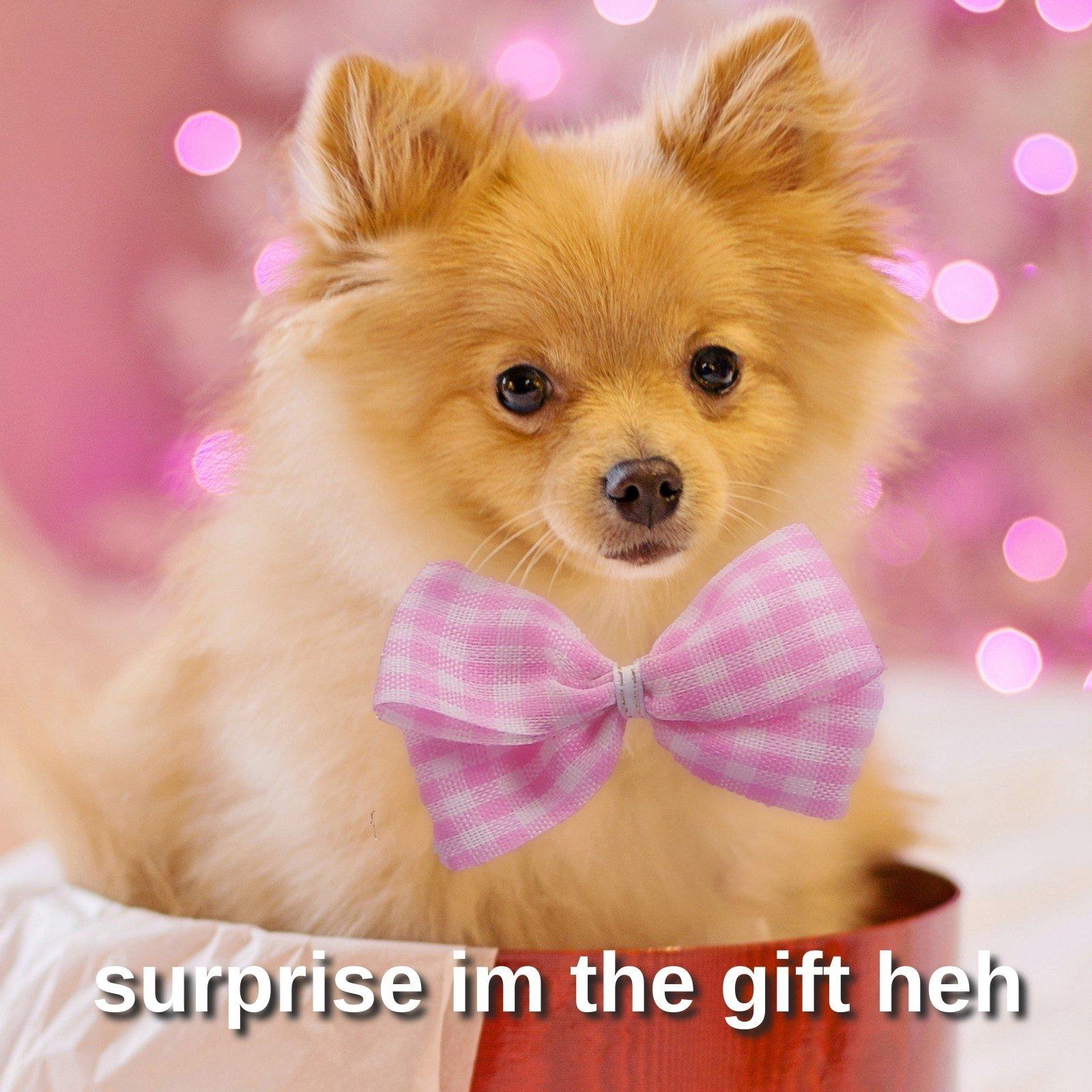 Dog Surprise Gift Square Animal Meme