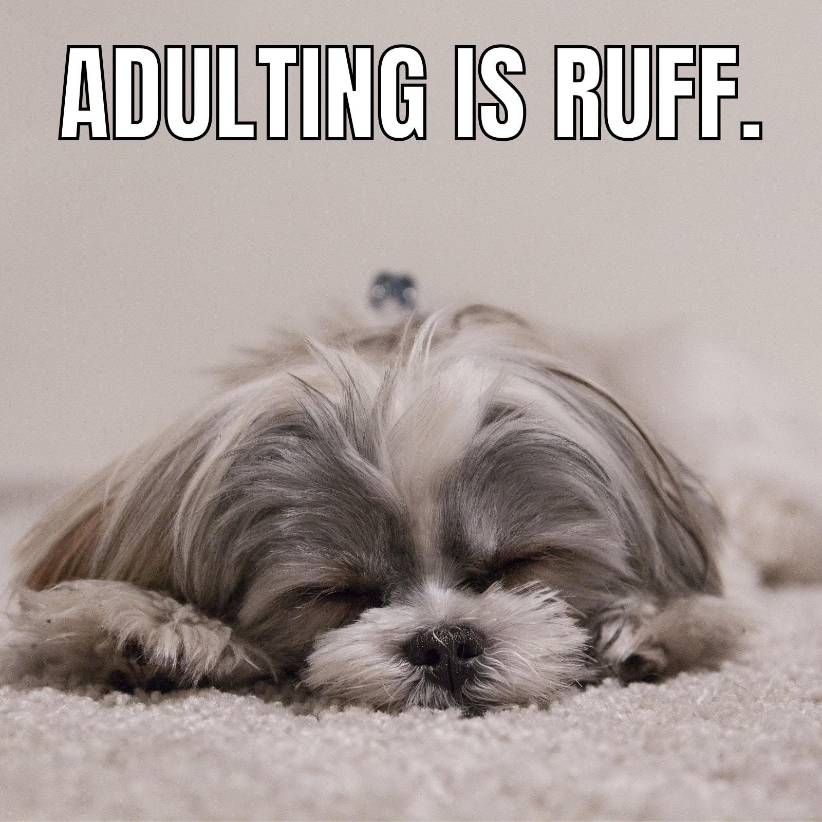 Dog Adulting Square Animal Meme