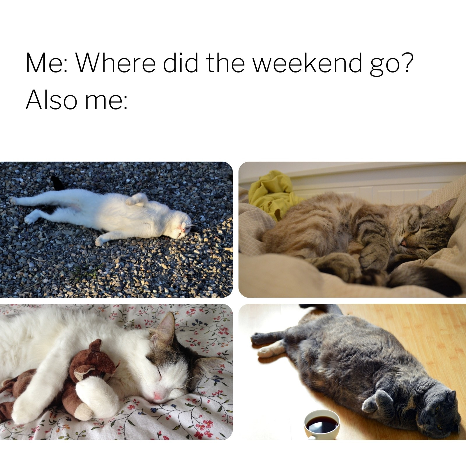 Cat Lazy Weekend Square Animal Meme