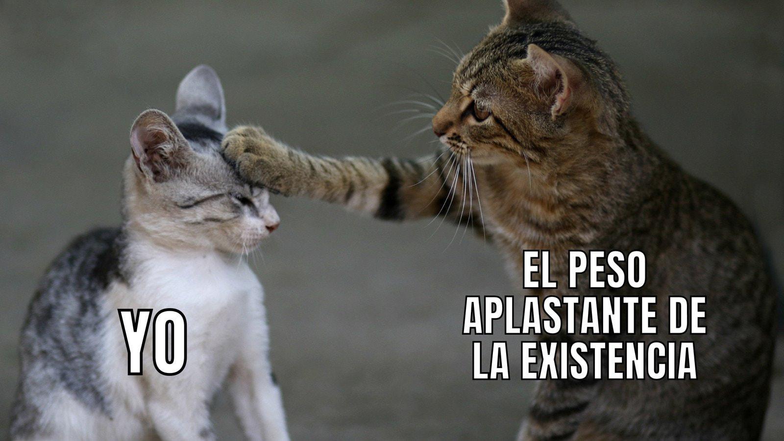 Gato Pata en la Cabeza Existential Foto y Texto Meme