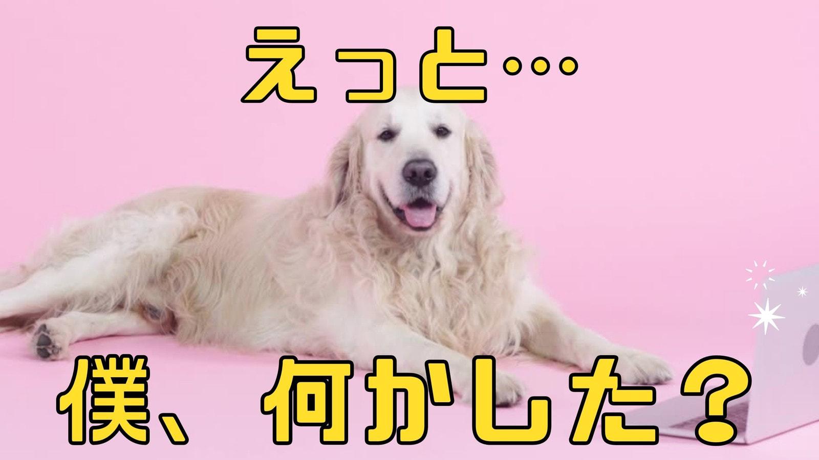 黄色とピンク クリーン 動画中心 面白い ペット ミーム