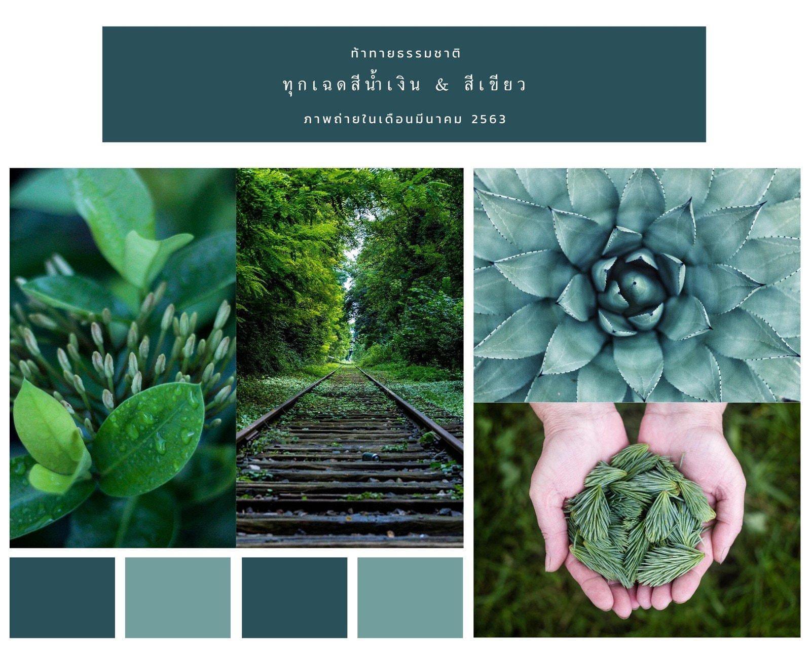 คอลลาจภาพถ่ายมูดบอร์ดธรรมชาติสีเขียว