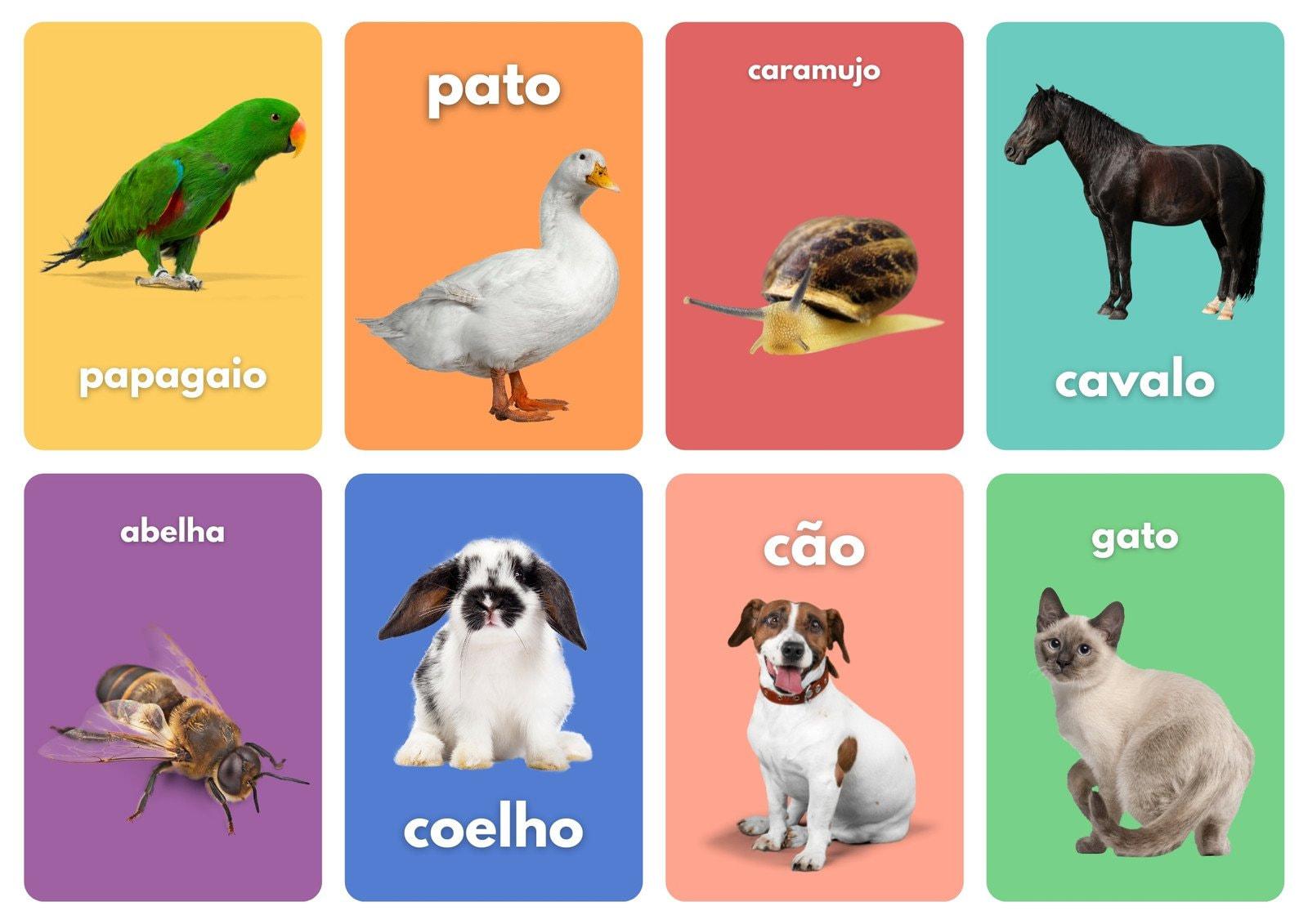 Aprenda Sobre os Animais Foto Flashcards