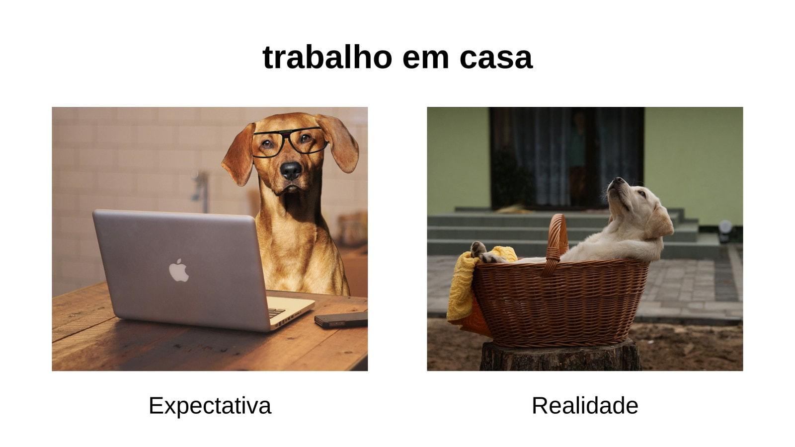 Branco Cachorro Trabalho em Casa Expectativa Vs. Realidade Paisagem Animal Meme