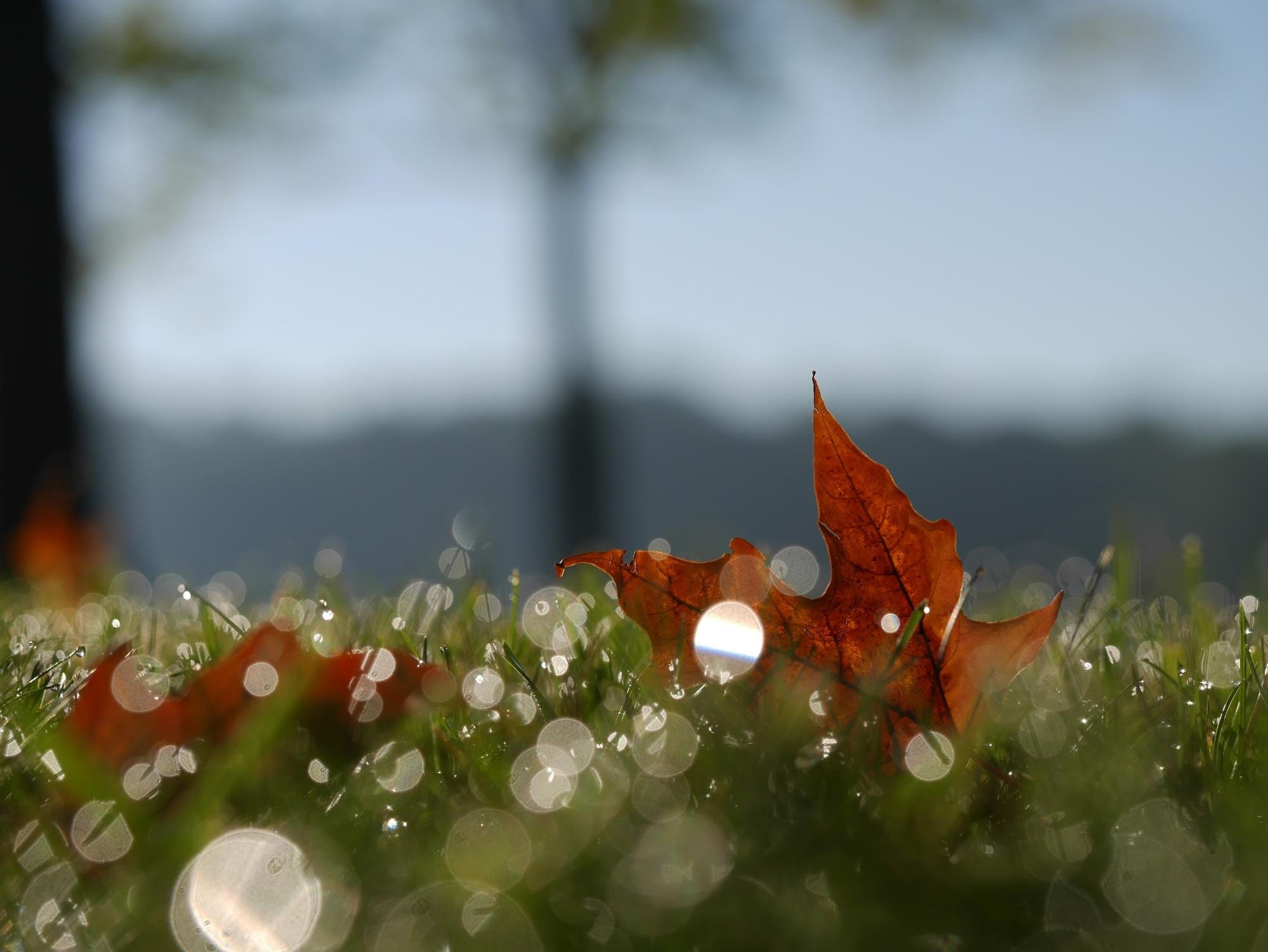 Leaf bokeh effect on grass foreground